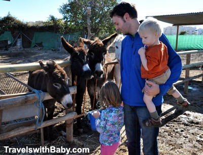 Visiting the Nerja Donkey Sanctuary on the Costa del Sol, Spain