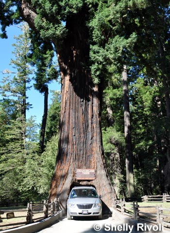 The 5 Best Places to Visit California\'s Giant Redwoods and Giant ...