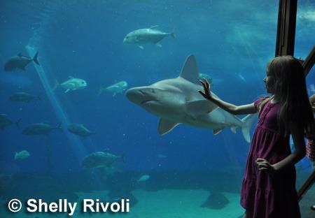 Shark tank at Maui Ocean Center