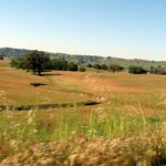 We're not on I-5 anymore: View from the car getting close to Paso Robles on Highway 101.
