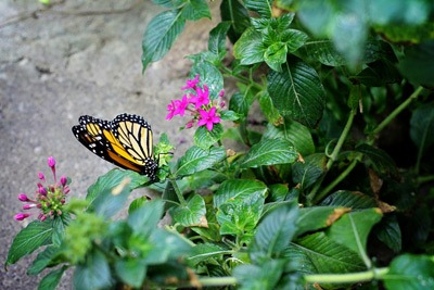 Butterflies abound in Seattle's Pacific Science Center. Photo credit: Keryn Means